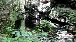 The mysteries of Sage's Ravine