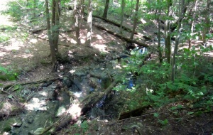 First glimpse of trout water in Sage's Ravine, coming from above